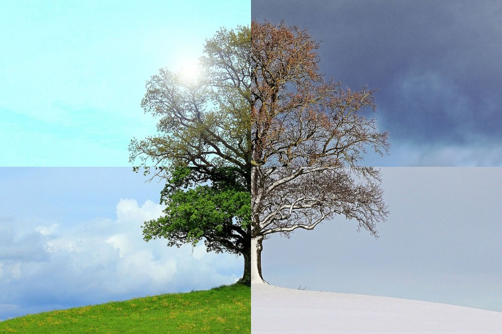 seasons-of-the-year-1127760_1280